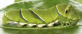 f:id:naturalist2008:20130526134556j:image
