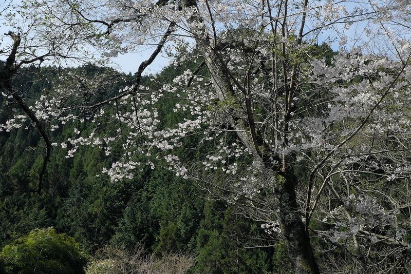 f:id:nature-image:20210415001305j:plain