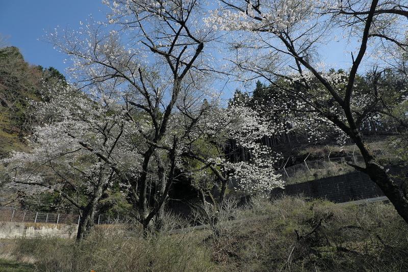 f:id:nature-image:20210415001313j:plain