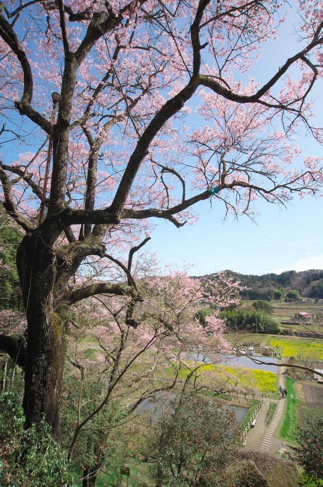 那須町芦野「堂の下の岩観音」下の石仏