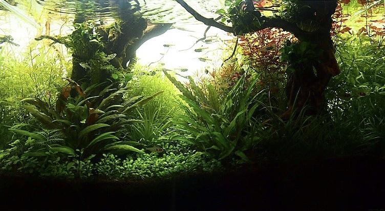 f:id:nature_1129:20200423205230j:plain