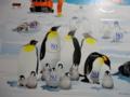 ペンギンのアップ_南極地域観測事業開始50周年郵便切手ポストカードセ