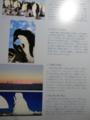 ポストカード説明_南極地域観測事業開始50周年郵便切手ポストカードセ