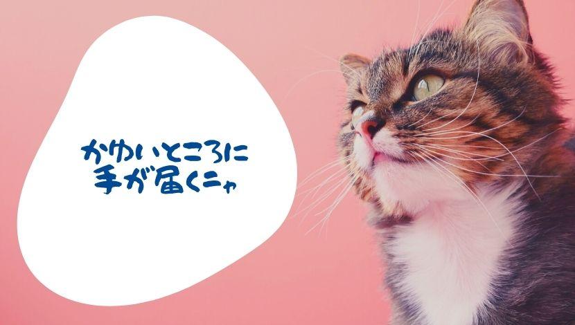 f:id:nayoro_urawa:20200906144214j:plain
