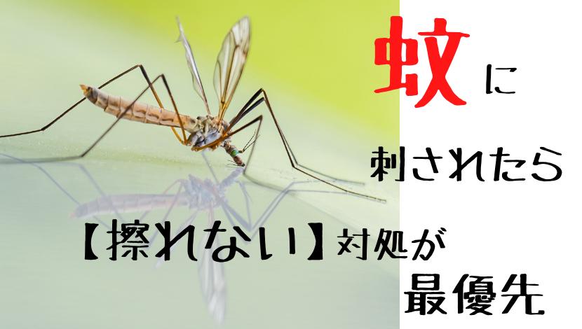 f:id:nayoro_urawa:20210606164438p:plain