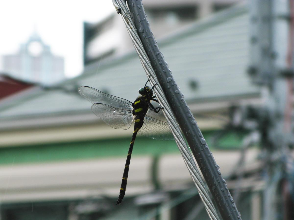 f:id:nayuto:20100729145515j:image