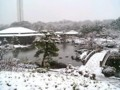 日本庭園18