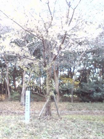 f:id:nazegaku:20121224155926j:image