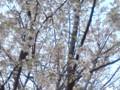 大阪南港野鳥園04