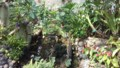 伊丹市昆虫館 チョウ温室