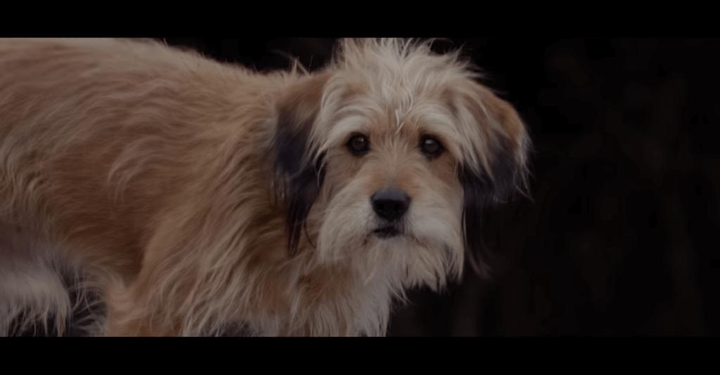 Netflixオリジナル映画『ベンジー』のスクリーンショット