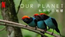 Netflixオリジナル『OUR PLANET − 私たちの地球』