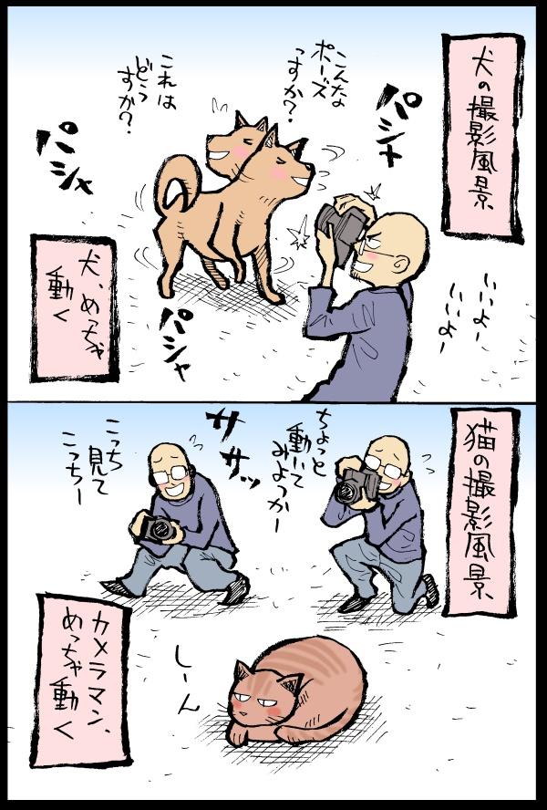 猫と犬の撮影風景の違い:石岡ショウエイ