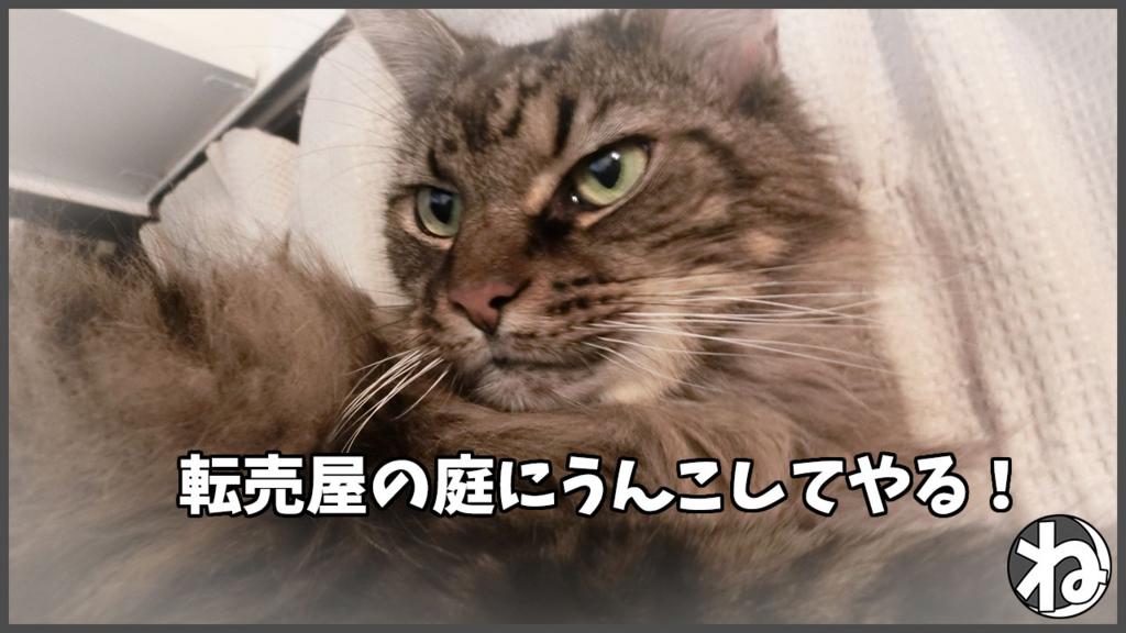 f:id:necozuki299:20180118203130j:plain