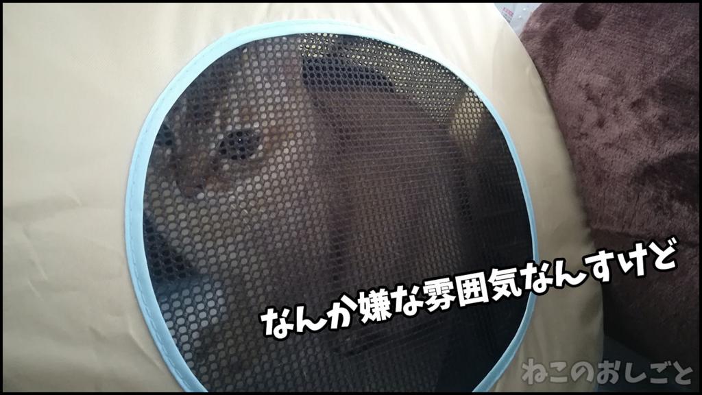 f:id:necozuki299:20180415213406j:plain