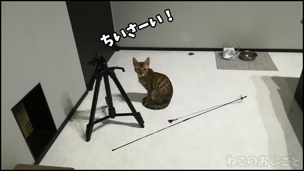 f:id:necozuki299:20180426173325j:plain