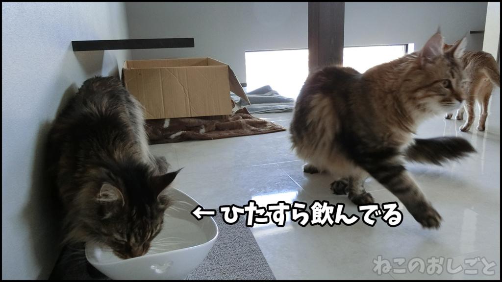f:id:necozuki299:20180429130127j:plain