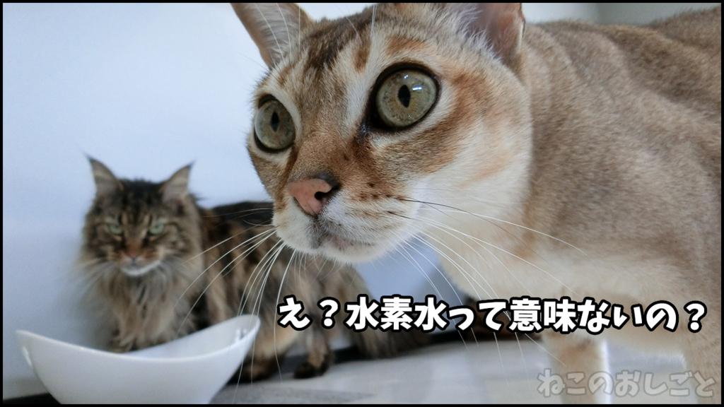 f:id:necozuki299:20180429133355j:plain