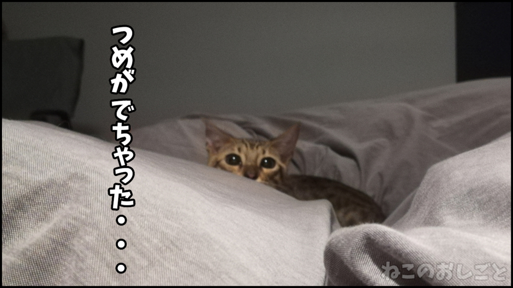 f:id:necozuki299:20180503185456j:plain