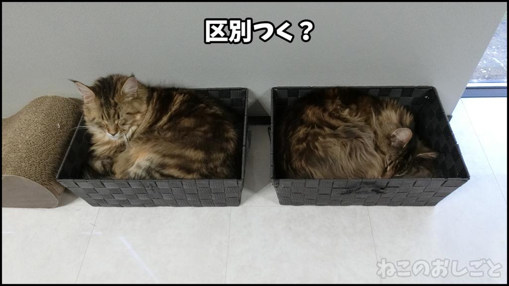 f:id:necozuki299:20180511194218j:plain