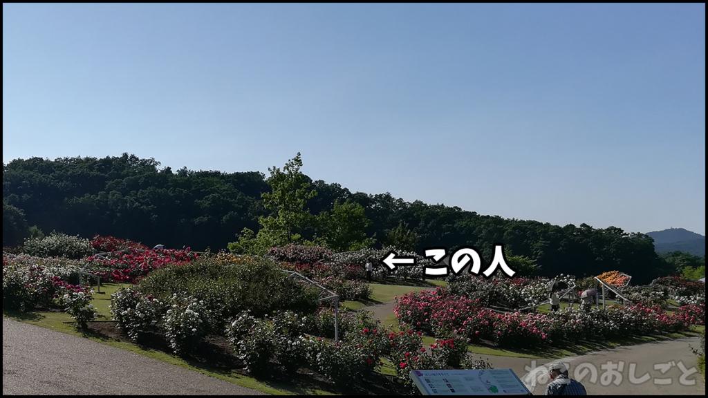 f:id:necozuki299:20180601202024j:plain