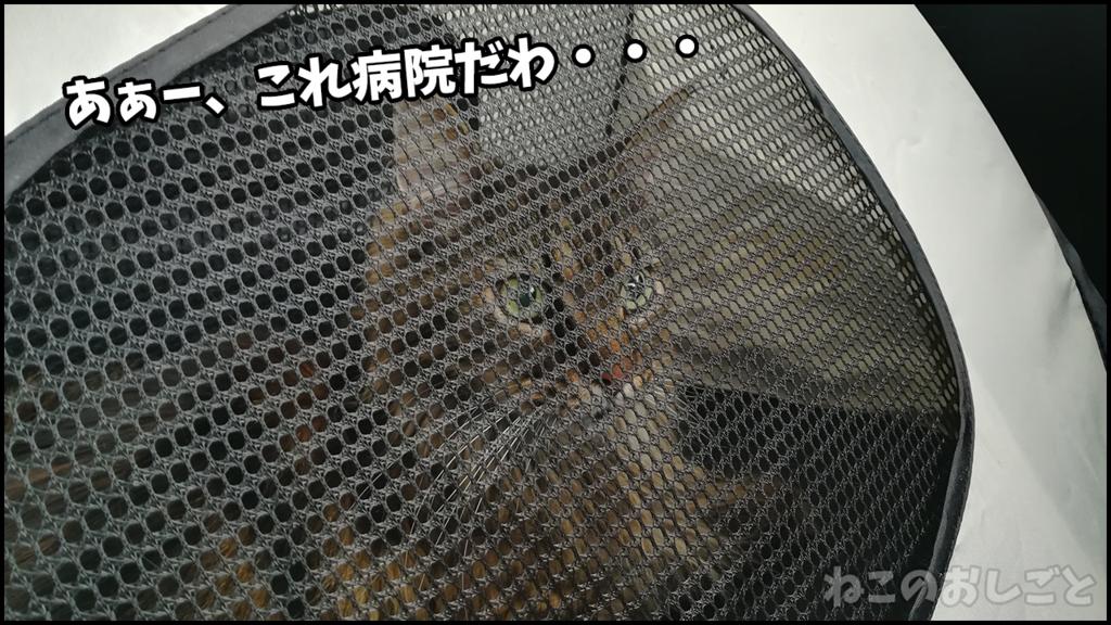 f:id:necozuki299:20180701193716j:plain