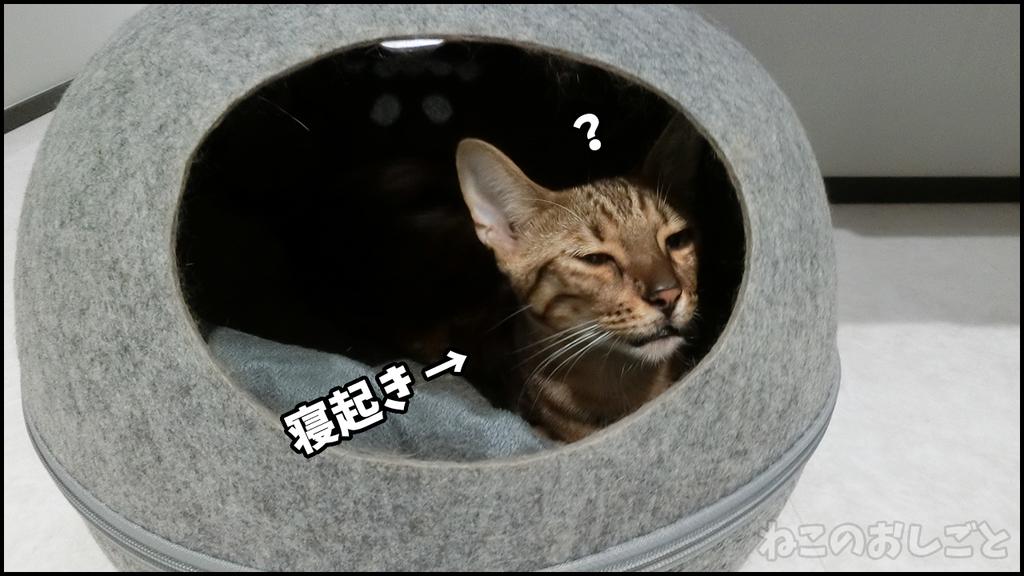 f:id:necozuki299:20180909012210j:plain