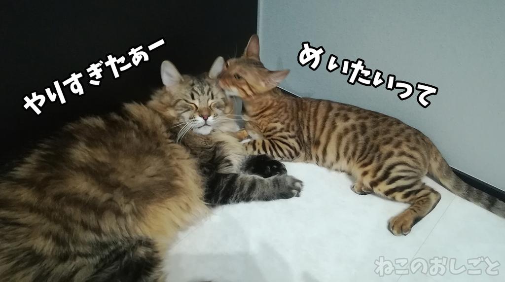 f:id:necozuki299:20181118162121j:plain