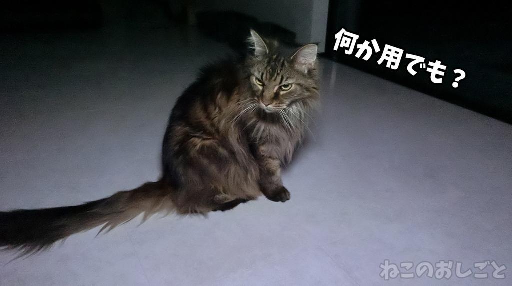 f:id:necozuki299:20181118174212j:plain