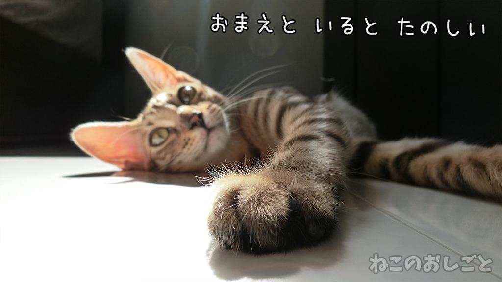 f:id:necozuki299:20181118213941j:plain