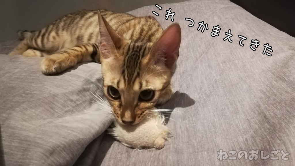 f:id:necozuki299:20181118222502j:plain