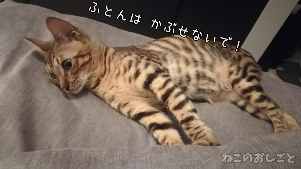f:id:necozuki299:20181118222546j:plain