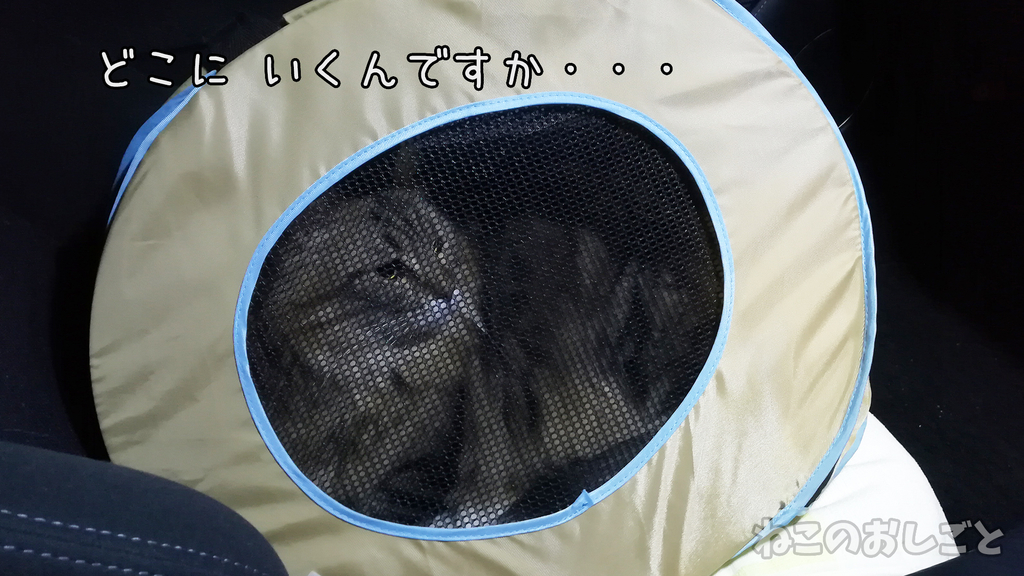 f:id:necozuki299:20181213000215j:plain