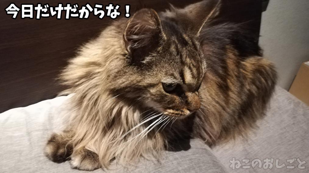 f:id:necozuki299:20181218124250j:plain
