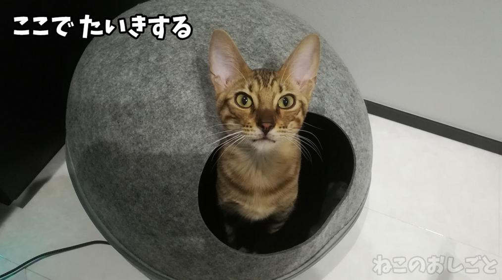 f:id:necozuki299:20181218125925j:plain
