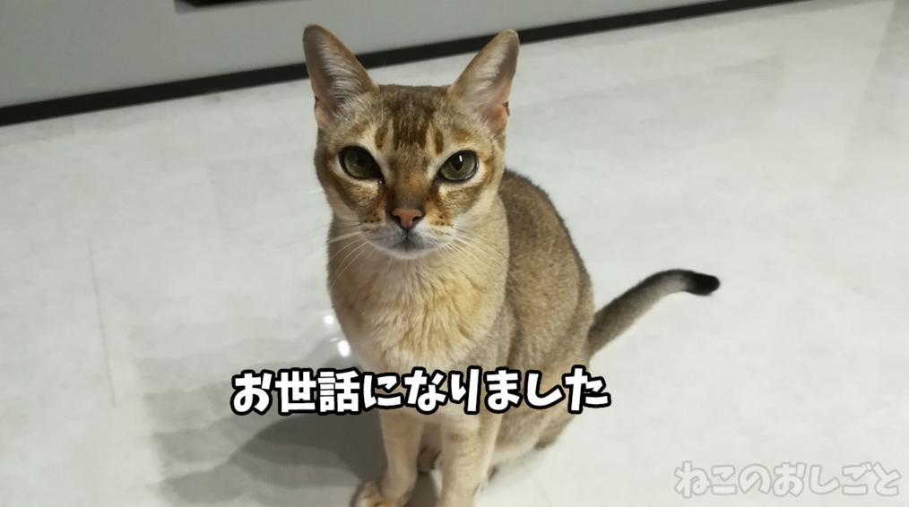 f:id:necozuki299:20181218125935j:plain