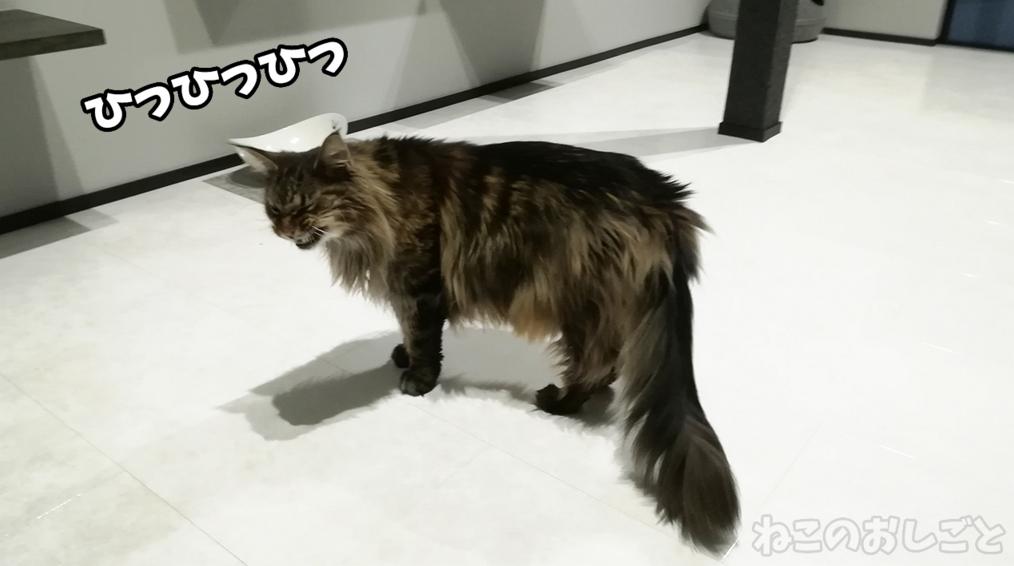 f:id:necozuki299:20181218125946j:plain