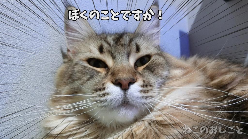 f:id:necozuki299:20190105192759j:plain