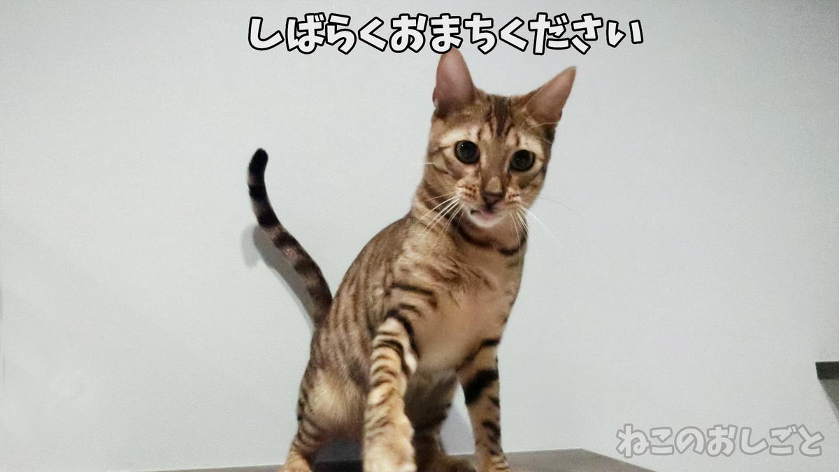 f:id:necozuki299:20190401020244j:plain