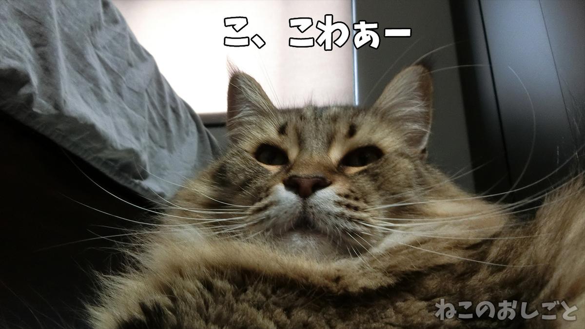 f:id:necozuki299:20200817170524j:plain