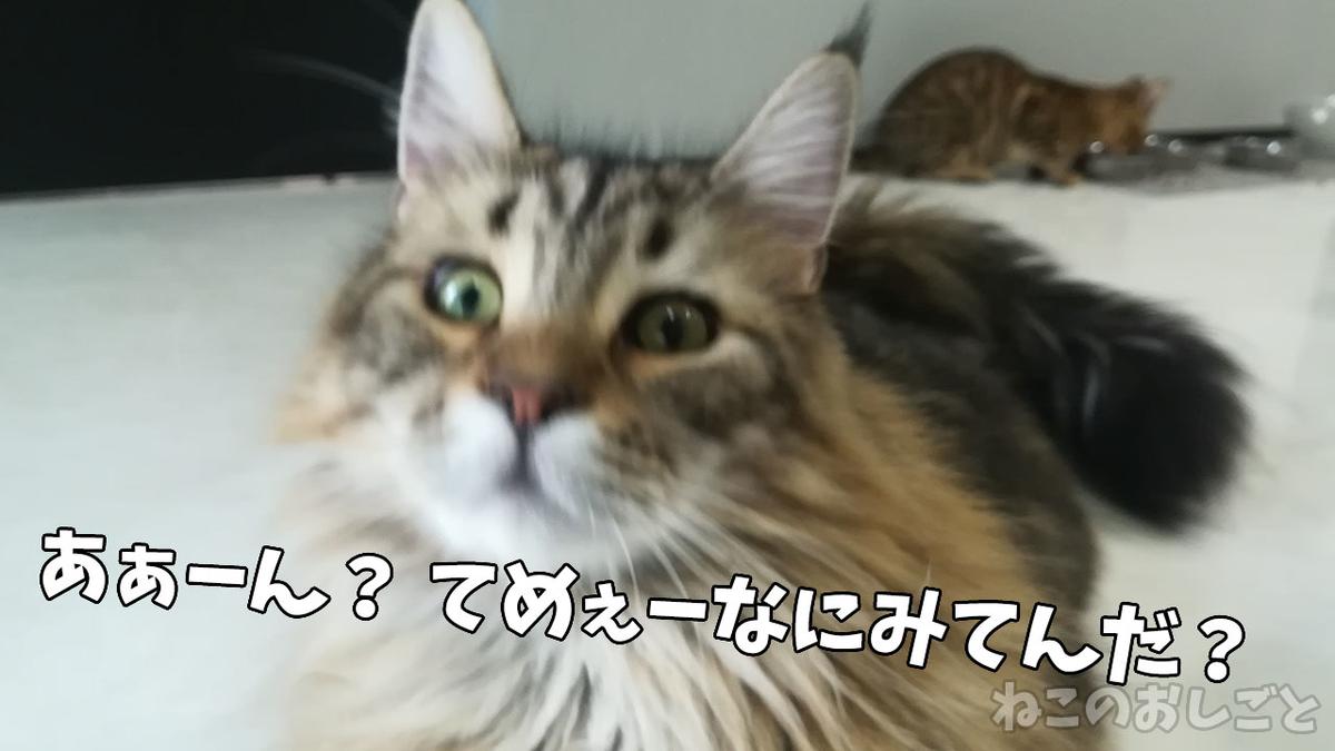 f:id:necozuki299:20210707185929j:plain