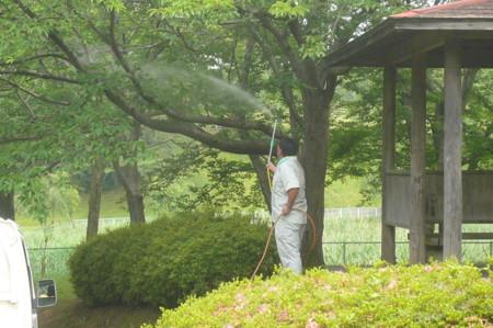 f:id:neemkyokai:20100618101231j:image