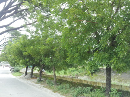 f:id:neemkyokai:20120925133807j:image