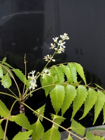 f:id:neemkyokai:20170723154827j:image