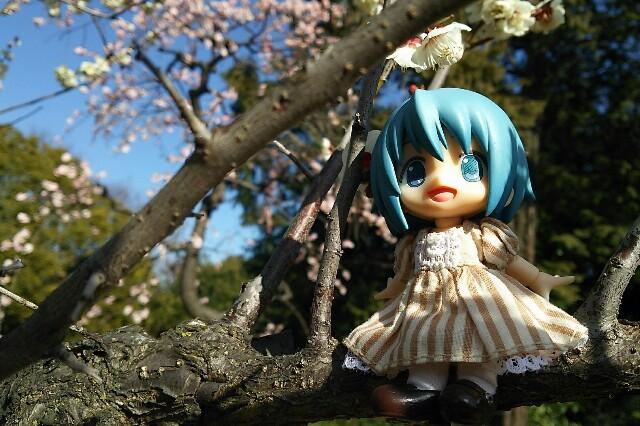 f:id:negi_a:20170306203905j:image