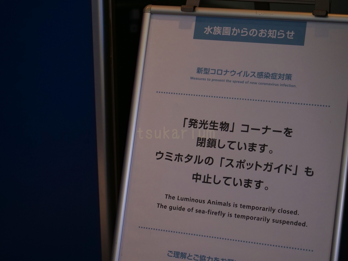 f:id:negototsukasa:20200623223437j:plain