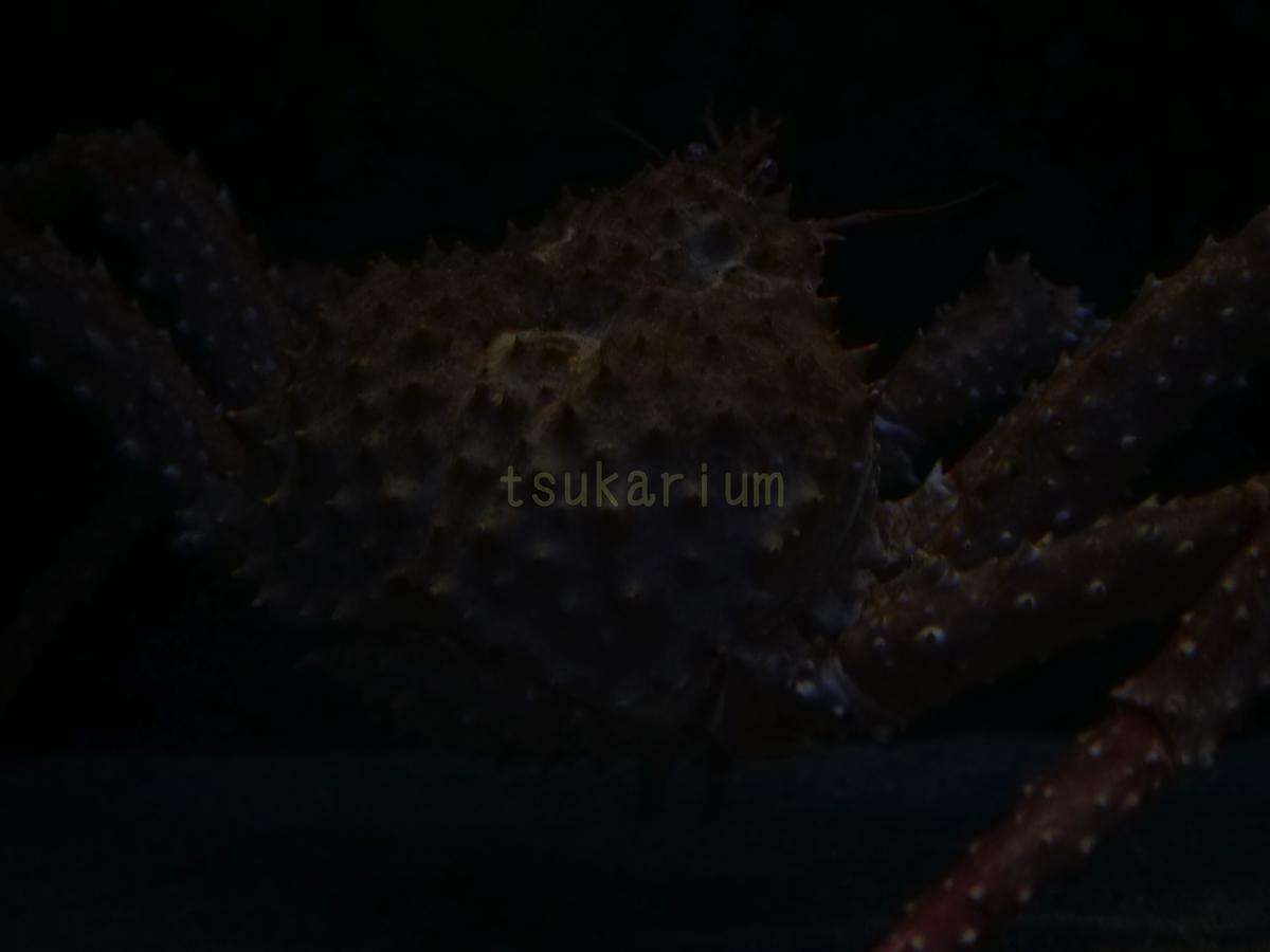 f:id:negototsukasa:20200705015737j:plain