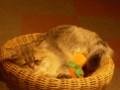 [オフ会][猫]