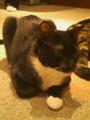 [オフ会][猫]1025onomasayukiさんを囲んでもふもふするオフ