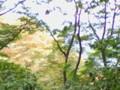 [葉][高尾山]写真